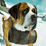 St bernhardshund - George Pickow, National Geographic 1957